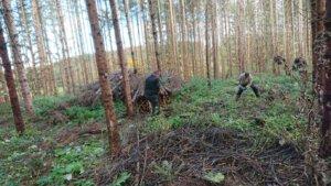 Bäume pflanzen in regionalen Wäldern